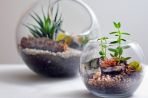 A detailed and brief explanation of terrarium workshop Singapore